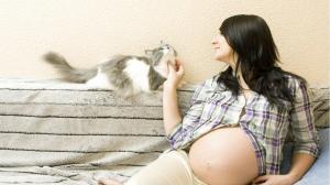 Токсоплазмоз при беременности: последствия для плода и меры предосторожности